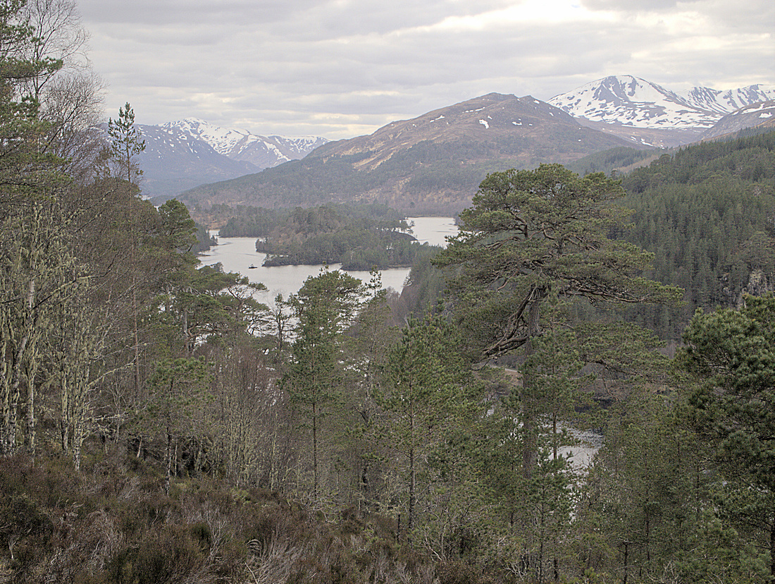 The view ahead to Glen Affric