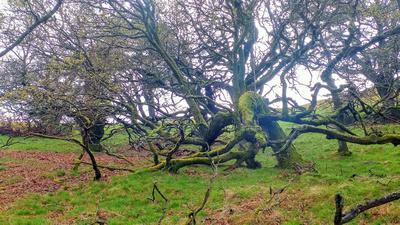 Old odd tree