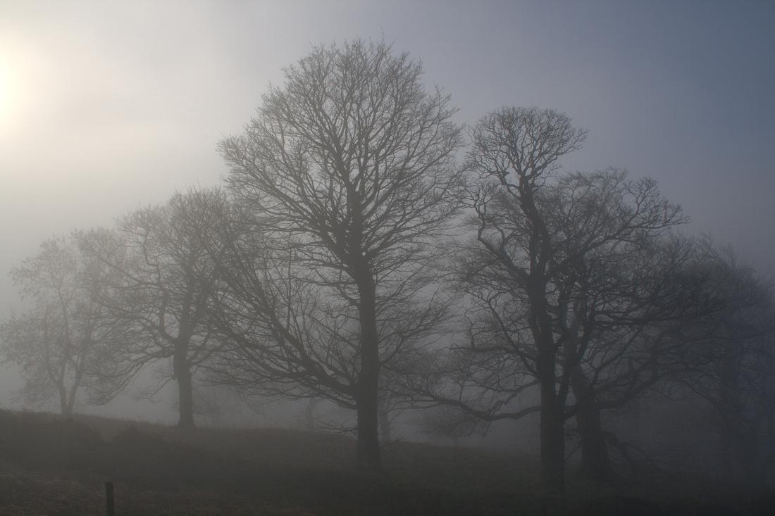 fog ochil hills woodland park wood hill