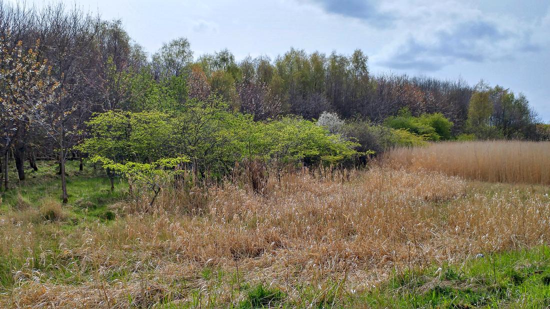 Abbotshaugh Community Woodland