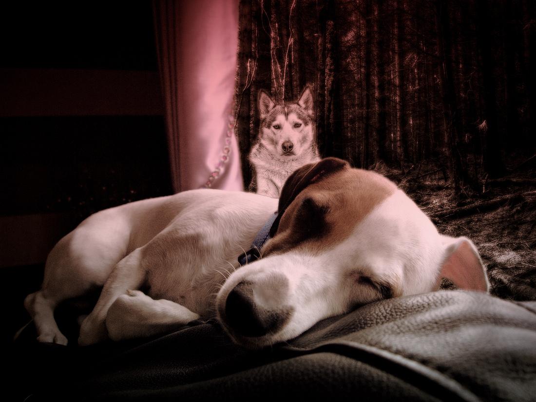 Doggy Dreams
