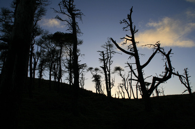 Remnants,saline, hill, scots, pines, scotland