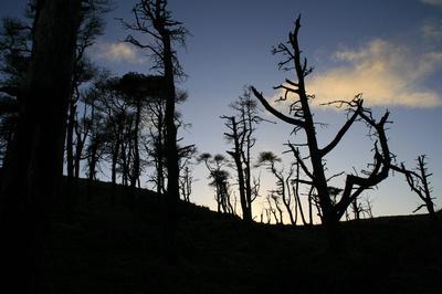 Remnants,saline, hill, scots, pines, scotland